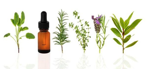 Young Living Oils Plants